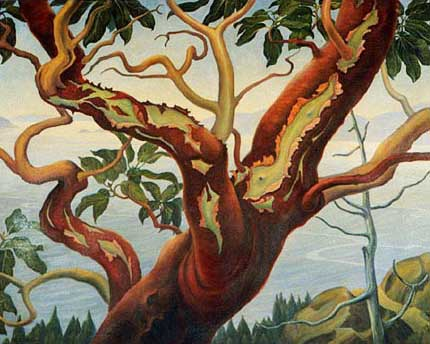 "Arbutus Shedding Bark Oil on Panel 37"" x 30"", 1947"
